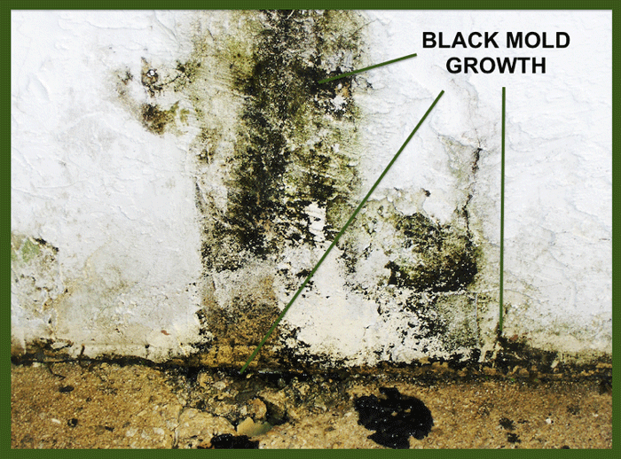 black mold growth - Exposure To Black Mold